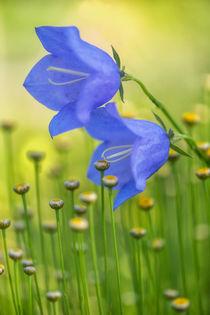 Flowers 6735 by Mario Fichtner