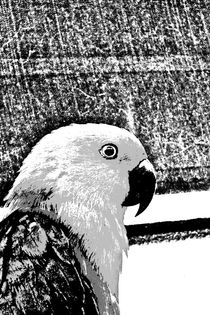 Papagaio2