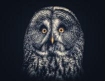 Owl-joe