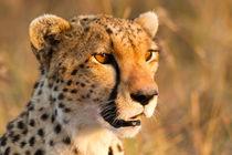 Ewb-cheetah-10