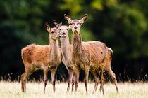 Ewb-red-deer-20