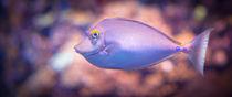 Barbara's Fish by Ingo Menhard