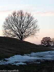 Baumschoenheit-am-oderdamm
