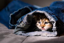 Kitten im Jeanstunnel by Susi Stark