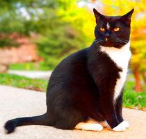 Tuxedo Cat by lanjee chee