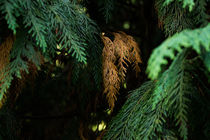Green Forest by dagino