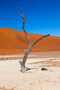 Sossusvlei Namibia Dead tree. von kytefoto