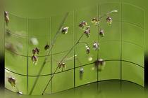 Gräser - Zittergras von Chris Berger