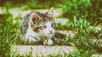 Baby Cat Playing In Grass von Radu Bercan