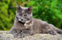 Cat-toskana