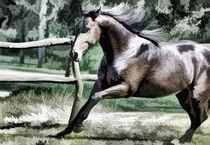 Horse-in-pasture