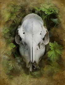 Deer Skull and Leaves by rambler
