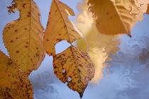 Herbstkirsche by Nikola Hahn