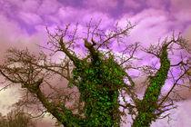 Efeuzauberbaum - Herbst by Nikola Hahn
