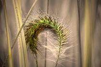 Gras by Nikola Hahn