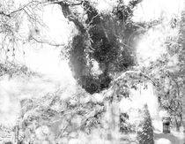 Efeuzauberbaum - Winter by Nikola Hahn