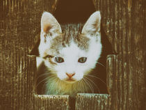 Small Baby Kitty Cat Portrait von Radu Bercan