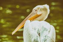Wild Pelican Portrait by Radu Bercan