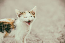 Cute Cat Meowing With A Funny Laughing Face by Radu Bercan