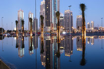 Dubai Trees by stillcaptured