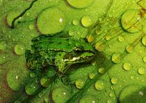 Der-gruene-frosch