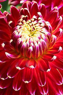 Blütendetails by Bernhard Kaiser