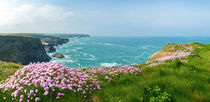 pink flowers pano by photoplace