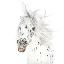 """Pony-Power """"Wildthing"""" von cavallo-magazin"""