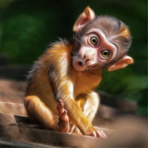 baby monkey by photoplace