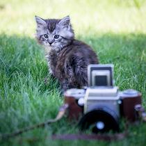 Maine Coone Kitten und eine alte Kamera by Susi Stark