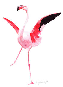 Flamingo3b