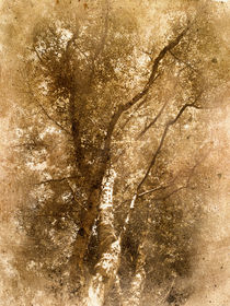 The-old-silver-birch