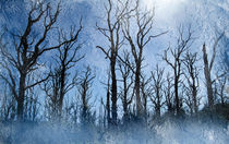 Dead-trees-in-blue