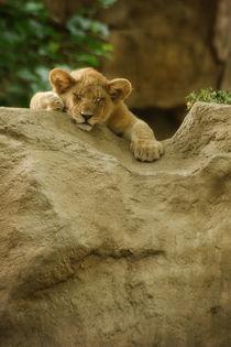 Lion No. 352 von Roger Brandt