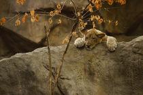 Lion365