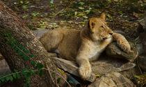 Lion402