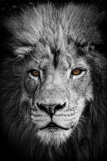Lion No. 853 von Roger Brandt