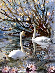'Summer in the Swan Lake' von Chris Berger