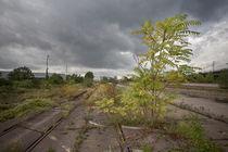 Bioreservat Güterbahnhof