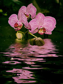 Orchideenwasser
