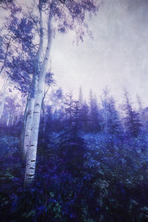 Wander in the foggy forest von Priska  Wettstein