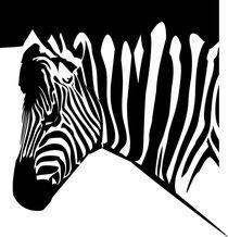 2839091-15574921-zebra-orig