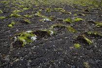 Lava und Moos von ysanne