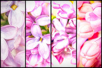 Lilac Bouquet Quadtych One by John Williams