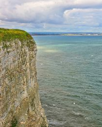 Bempton Cliffs by gscheffbuch