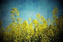 'blau-gelb' von er
