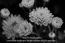 'Chrysanthemen mit Spruch' by er