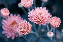 'Blütenhauch' by er