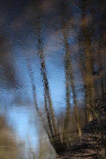 Wasserspiegelung in der Neetze von Simone Marsig