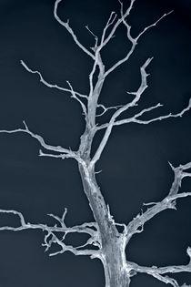 Der Baum von kiwar